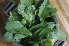 směs rostlin na špenát - merlík, brutnák, lípa, kopřiva, medvědí česnek