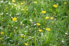 Květnatý trávník