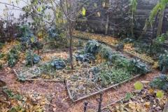1.11.2015 Záhony s přezimující zeleninou zamulčované vrstvou listí