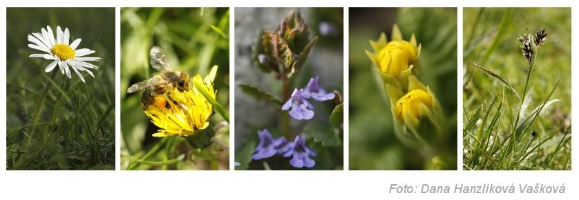 Jarní květena